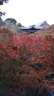 20151120東福寺(その6)