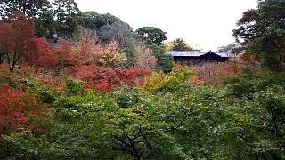 20151120東福寺(その7)