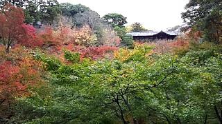 20151120東福寺(その8)