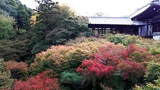 20151120東福寺(その10)