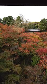 20151120東福寺(その13)
