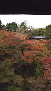 20151120東福寺(その14)