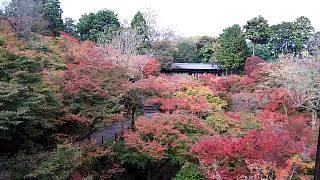 20151120東福寺(その17)