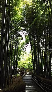 20160430化野念仏寺(その15)