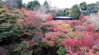 20151120東福寺(その20)