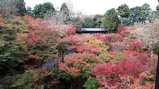 20151120東福寺(その21)