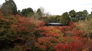 20151120東福寺(その22)