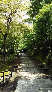 20160430化野念仏寺(その21)