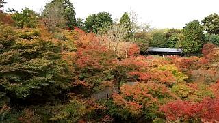 20151120東福寺(その26)