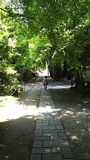 20160430化野念仏寺(その22)