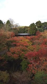 20151120東福寺(その28)