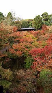 20151120東福寺(その29)