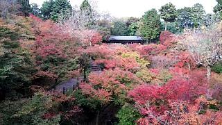 20151120東福寺(その32)