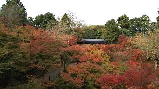 20151120東福寺(その33)