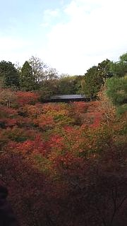 20151120東福寺(その34)