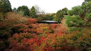 20151120東福寺(その38)