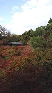 20151120東福寺(その41)