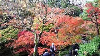 20151120東福寺(その45)