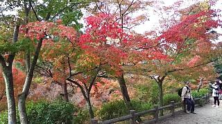20151120東福寺(その47)