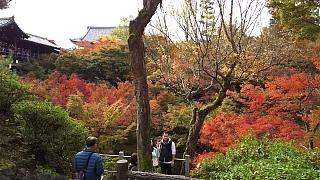 20151120東福寺(その48)