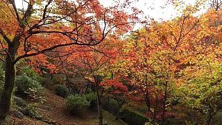 20151120東福寺(その52)