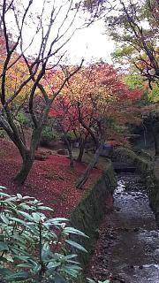 20151120東福寺(その54)