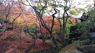 20151120東福寺(その58)