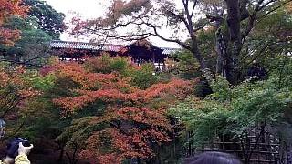 20151120東福寺(その60)