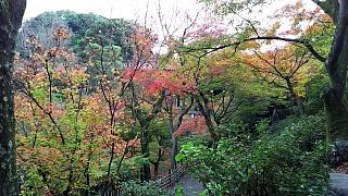 20151120東福寺(その65)