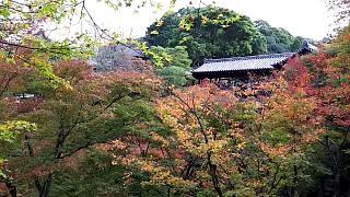 20151120東福寺(その66)