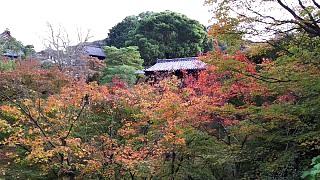 20151120東福寺(その67)
