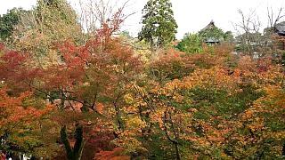 20151120東福寺(その68)