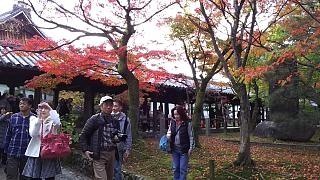 20151120東福寺(その71)