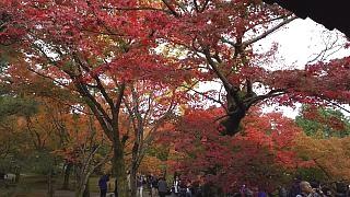 20151120東福寺(その86)