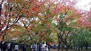 20151120東福寺(その88)