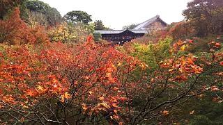 20151120東福寺(その91)