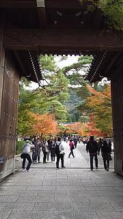 20151120永観堂(その1)