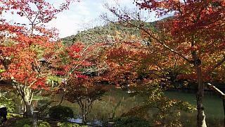 20151120永観堂(その51)