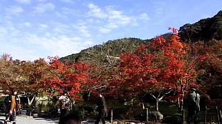 20151120永観堂(その53)