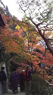 20151120永観堂(その65)