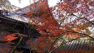 20151120永観堂(その67)