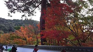20151120南禅寺(その3)