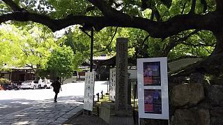 20160501青蓮院門跡(その6)