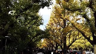 20151129外苑のイチョウ並木(その1)