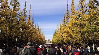 20151129外苑のイチョウ並木(その5)