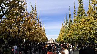 20151129外苑のイチョウ並木(その11)
