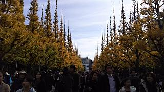 20151129外苑のイチョウ並木(その12)