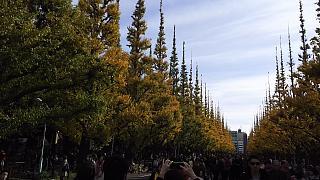 20151129外苑のイチョウ並木(その16)