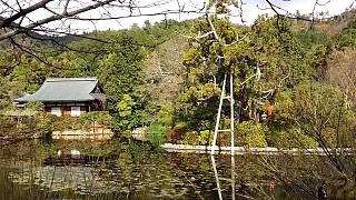 20151227龍安寺(その25)