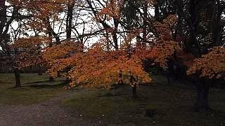20151228東寺(その9)